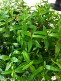 biurowa roślina Obraz Royalty Free