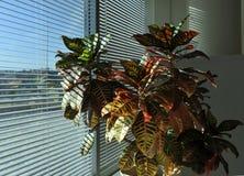 biurowa roślina Zdjęcia Stock