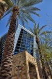 biurowe palmy Obrazy Royalty Free