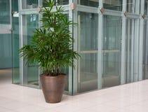 Biurowy korytarz z drzewkami palmowymi w garnkach Obraz Royalty Free