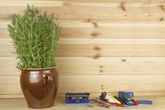 Biurowy szelfowy zszywacz i kwiatu garnek z lawendą Fotografia Stock