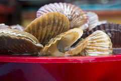 Bivalvia for sale at fish market, South Korea. Bivalvia is a class of marine and freshwater molluscs with laterally compressed bodies enclosed by a shell in two Stock Image