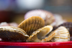 Bivalvia for sale at fish market, South Korea. Bivalvia is a class of marine and freshwater molluscs with laterally compressed bodies enclosed by a shell in two Royalty Free Stock Photography