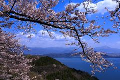 Biwa湖和樱桃 库存图片