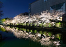 Biwa lake canal with sakura tree besides Stock Photo