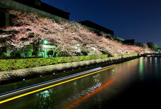 Biwa lake canal with sakura tree besides Royalty Free Stock Images