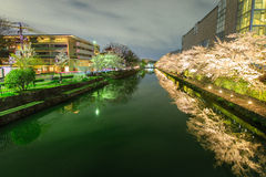 Biwa lake canal with sakura tree Royalty Free Stock Image