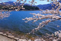 Biwa See und Kirsche Stockbilder