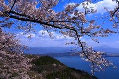 Biwa See und Kirsche Stockbild
