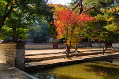 Biwon (secret garden) (built 1623 onward) Stock Photo