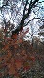 Bixhoma Lake. Fall colors at the lake royalty free stock photos