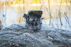 Bizar bevroren ijs op een steen stock foto's