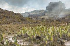 Bizarre ancient rocks of the plateau Roraima tepui - Venezuela,. Latin America Stock Photos