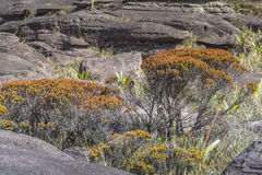Bizarre ancient rocks of the plateau Roraima tepui - Venezuela,. Latin America Stock Photo