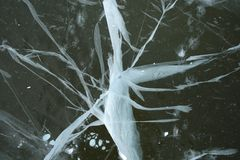 Bizarre cracked ice. Frozen river: bizarre cracked ice, reminding an abstract white insect royalty free stock photos