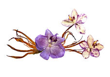 Bizarre curved extruded dried lily petals. Pressed pink orchid f. Lower blue stock images