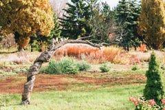 Bizarre curvy tree in garden at sunny day. Bizarre curvy tree in green garden at sunny day Royalty Free Stock Image