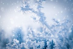 Bizarre forms of snow crystals on the branch of a tree on a cold day royalty free stock image