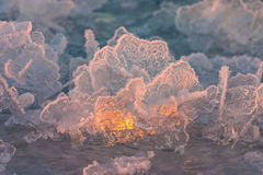 Bizarre Ice Crystals Stock Photography