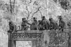 Bizarre india. Group of monkeys seating on men's toilet india Royalty Free Stock Image