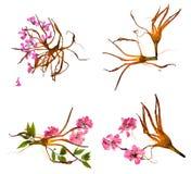 Bizarre lily petals and pressed geranium. Bizarre curved extruded dried lily petals and pressed delicate flower geranium pink Stock Photos