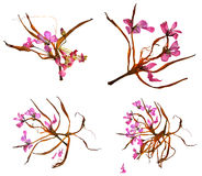Bizarre lily petals and pressed geranium. Bizarre curved extruded dried lily petals and pressed delicate flower geranium pink Royalty Free Stock Photo