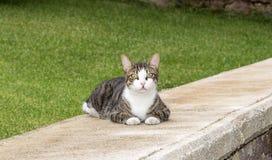 Bizarre Looking Cat Stock Image