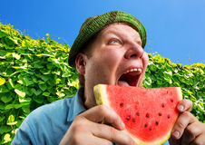 Bizarre man eating watermelon. Outdoors in summer stock photography