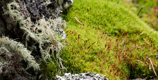 Bizarre Mossy Landscape Royalty Free Stock Images