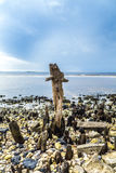 Bizarre old rotten trees at. The coast Stock Images