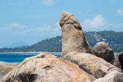 Bizarre rock , hin ta hin yai, very famous landmark of Samui, Thailand Royalty Free Stock Photography