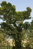 Bizarre tree Stock Image