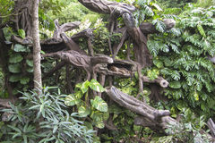 The bizarre weave of strange trees gave shelter to the leopard. Bali Safari & Marine Park stock photo