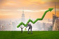 Biznesmen nawadnia pieniężną kreskową mapę w inwestorskim pojęciu Zdjęcie Stock