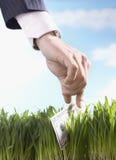 Biznesmen Podnosi Pięćdziesiąt Dolarowy Bill Od trawy Zdjęcia Stock