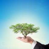Biznesmen ręka trzyma dużego drzewa z niebieskim niebem Zdjęcia Royalty Free