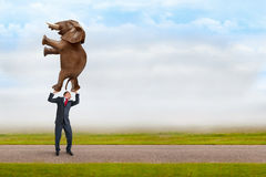 Biznesmen trzyma słonia z jeden palcem zdjęcia royalty free