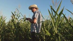 Biznesmen z pastylk? sprawdza kukurydzanych cobs agronom i, sprawdzamy dojrzewa? kukurydzanych cobs zbiory
