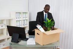 Biznesmena kocowania falcówki I roślina Zdjęcie Royalty Free