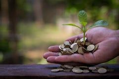 Biznesmena mienia roślina kiełkuje od garść złocistych monet Zdjęcie Stock