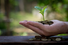 Biznesmena mienia roślina kiełkuje od garść złocistych monet Obraz Stock