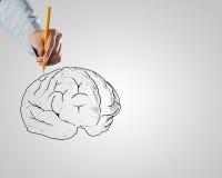 Biznesmena rysunkowy mózg Zdjęcia Royalty Free