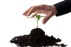 biznesowi target749_0_ ręki rośliny potomstwa zdjęcia royalty free