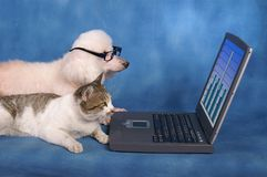 Biznesowi zwierzęta domowe Zdjęcia Stock