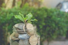 Biznesowy i pieniężny pojęcie: zielony kiełkowy drzewny dorośnięcie przez pieniądze monet w savings pieniądze szklanym słoju Zdjęcie Stock