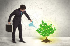 Biznesowy mężczyzna nawadnia narastającego zielonego dolarowego znaka drzewa Zdjęcia Royalty Free