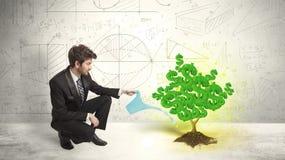 Biznesowy mężczyzna nawadnia narastającego zielonego dolarowego znaka drzewa Zdjęcia Stock
