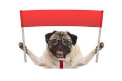 Biznesowy mopsa pies z krawatem i czytelniczymi szkłami trzyma up czerwonego sztandaru znaka, Obraz Stock