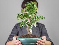 Biznesowy przyrost lubi bonsai drzewni Obraz Royalty Free