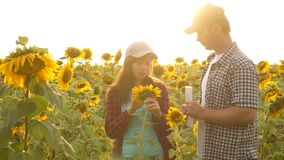 Bizneswoman i biznesmen w śródpolnym planie ich dochód agronom studiuje uprawy słonecznik średniorolne mężczyzna pracy z zdjęcie wideo